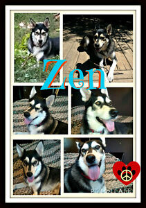 I'M ZEN, I NEED A HOME WITH  A FRIEND