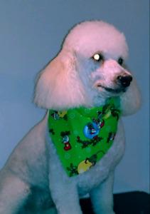 Dog grooming SvetLana~ HOLIDAY SPECIAL