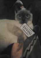 Return of missing Siamese looking cat