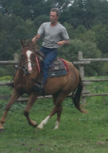 Horse Training,Lessons,Sales,Hauling,Farrier,Barn/Stall Rentals