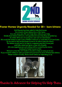 Foster Homes for Kittens Urgently Needed