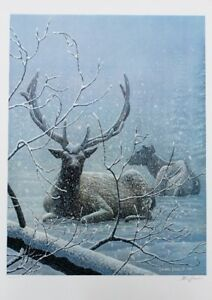 Large Canadian Wildlife Print, Deer in Winter Snow Storm