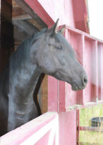 Beautiful Black Gelding