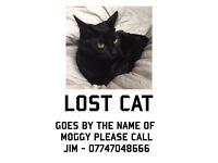 Mogey the lost black cat.