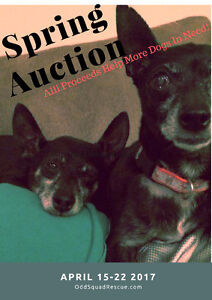 Spring Online  Auction to help Dogs in need!