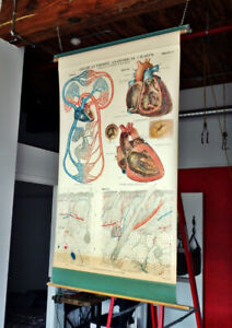 Vintage Industrial 1918  Frohse Anatomical Chart #4 Heart Skin