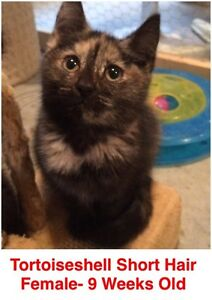 Rescue Kittens- Spayed/Neutered, Vaccinated, Dewormed!