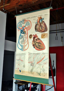 Vintage 1918 American Frohse Anatomical Chart #4 Heart-Skin Map