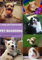 PET BOARDING for small dogs, hamsters and guinea pigs