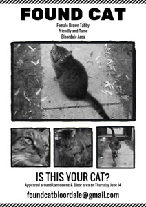 [UPDATE: Owners Found]FOUND CAT - Bloordale Friendly Brown Tabby