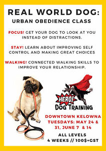 Real World Dog Obedience Class