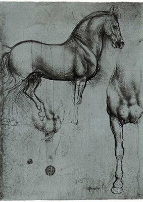 Leonardo da Vinci (Horse trials) Art Poster Print Poster Print, 13x19