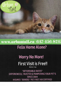 Dog Walking Find Or Advertise Pet Animal Services In Toronto