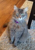 Female Cat looking for good home
