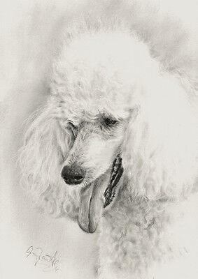 Original Zeichnung Pudel Poodle Hund drybrush drawing von Angela Franke