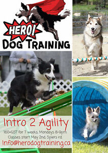 Intro to Dog Agility Classes!