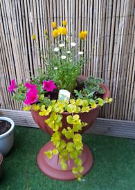 Jardiniere planter