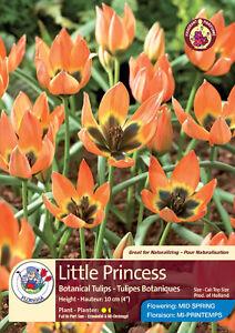 Tulip Time! Buy 2 get 1 free!!!