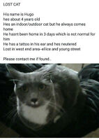 Hugo is Missing from the West End Area--(WMFCW)