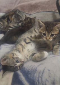 Kittens for rehoming in Oliver