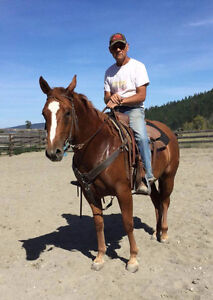 Roping or working ranch horse prospect!