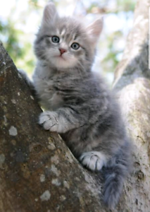 Wanted: Wanted kitten