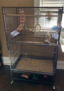 Two parakeets with large cage