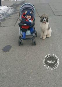 Dressage à domicile canin