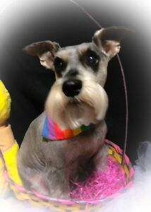 Evening and weekend pet groomer in Dartmouth