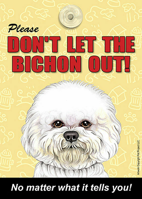 Bichon Frise Don