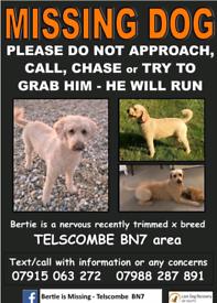 Bertie *missing Cockapoo *possibly Stolen