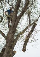 Grinders Tree Service, Removals, pruning, stump grinding