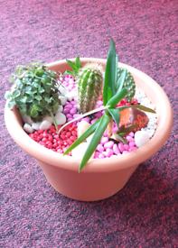 Cactus Succulent Rock Garden planter