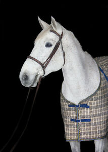 Horse for lease London Ontario