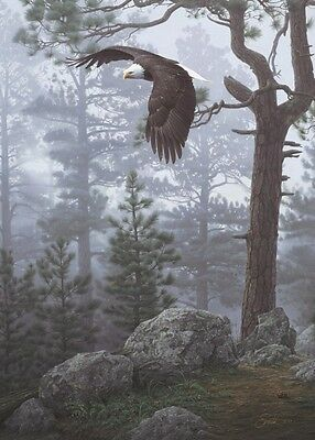 EAGLE ART PRINT - Shrouded Forest (detail) by Daniel Smith 11x14 Wildlife (Eagle Art Print)