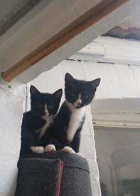 Beautiful little kittens