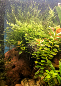 Guppies, small snails and plant moss clippings