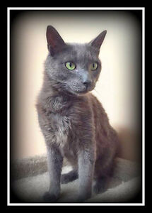 RUSSIAN BLUE Mix  --  Fixed  -- @ Small Things