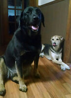 4 yr old and 6yr old female dogs need new loving home