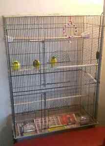 1 Male & 2 Female Yellow Singer Canaries with Large Cage