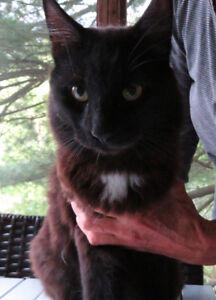 FOUND! Young black cat