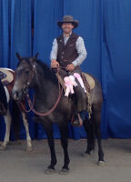 Colt Starting & Quality Training for Horses and Mules