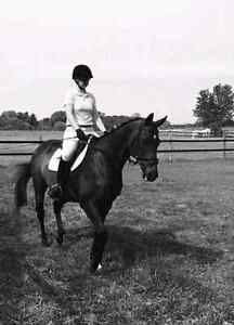 Horse for part board: Wonderful Thoroughbred.