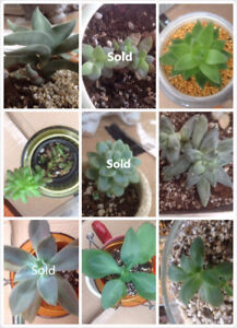 Beautiful Succulent Garden Price Start Price From $5 Only