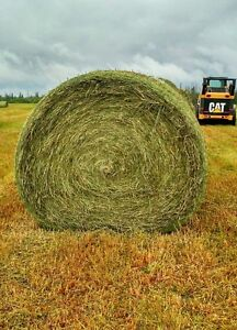 New 2017 Hay For Sale