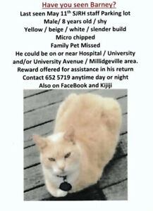 Millidgeville ( Do you know someone that feeds  stray cats) ?
