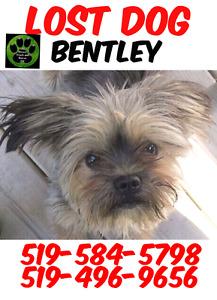 Bentley is missing