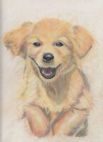 Pet Portraits in time for Christmas by skilled Artist