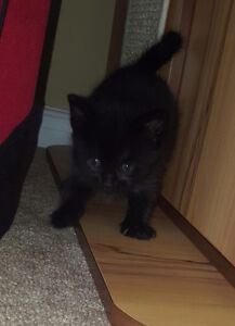 Beautiful kittens for sale!!