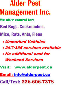 Pest control services Kitchener, Waterloo, Cambridge, Brantford